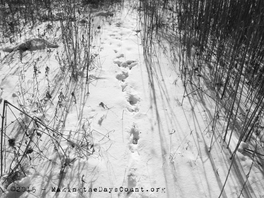 animal tracks leading into the shadows of the woods and vegetation and safety